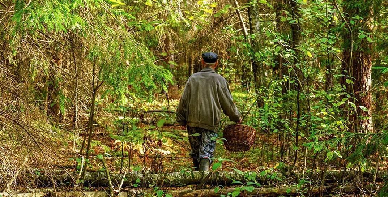 В лесу потерялся 84-летний дедушка. Спасатели не могут его найти