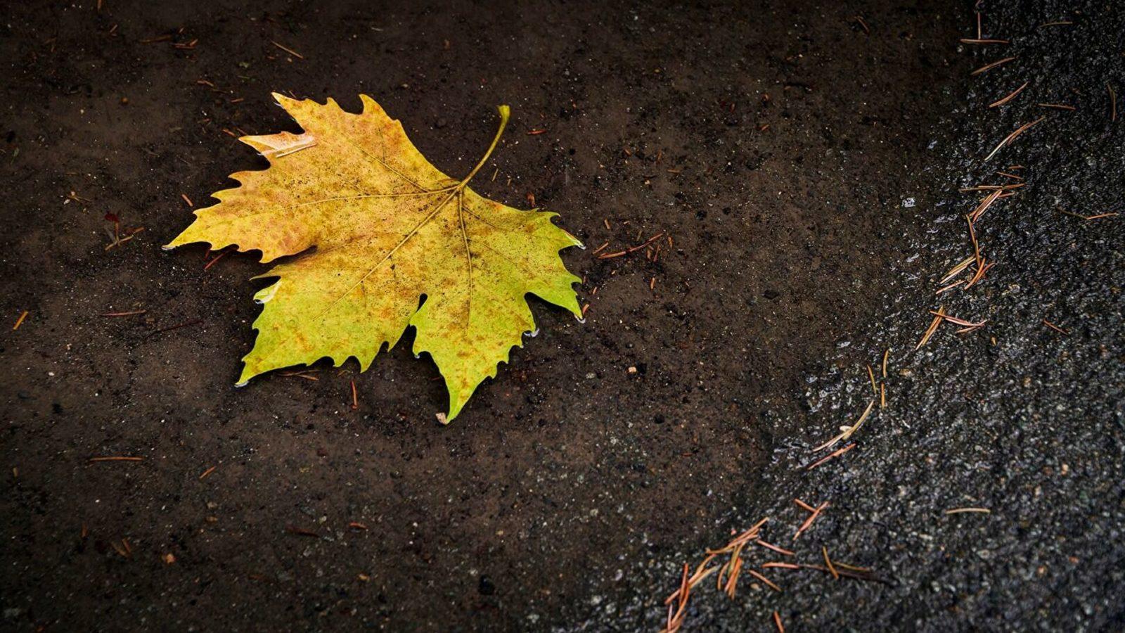 22 сентября: какой сегодня праздник, что можно, а что нельзя делать в этот день